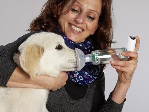 Medikamenteninhalation bei Hunden