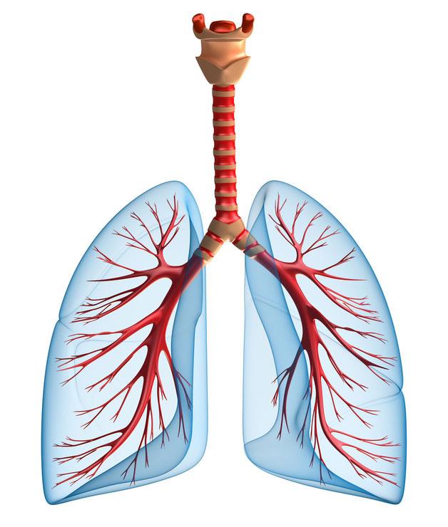 Mukoviszidose - Schleimbildung in den Bronchien